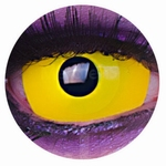 Sclera Yellow funlenzen, Yellow